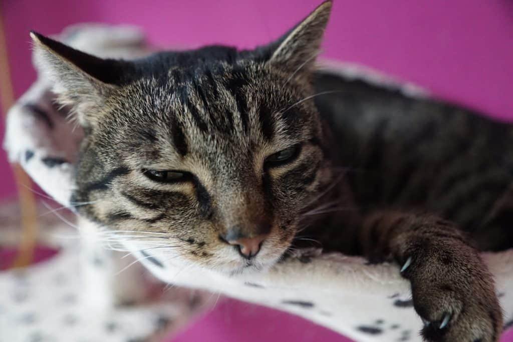 Süße Katze beim Aufwachen