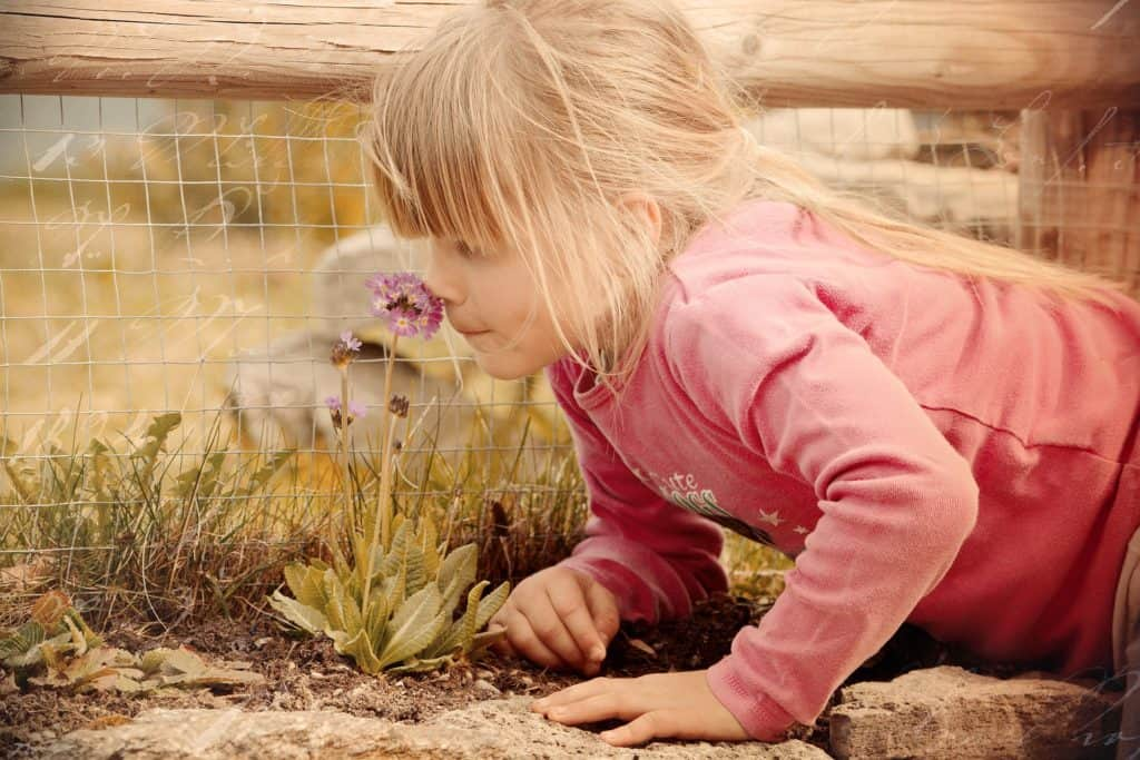 Wurzelchakra regelt den Geruchssinn