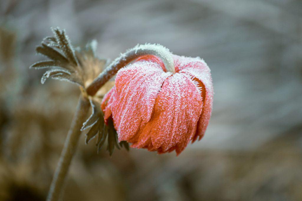 Kälte im Leben blockiert das Sakralchakra