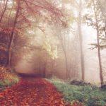 Fantasiereisen Texte Kostenlos Verzauberter Herbstwald
