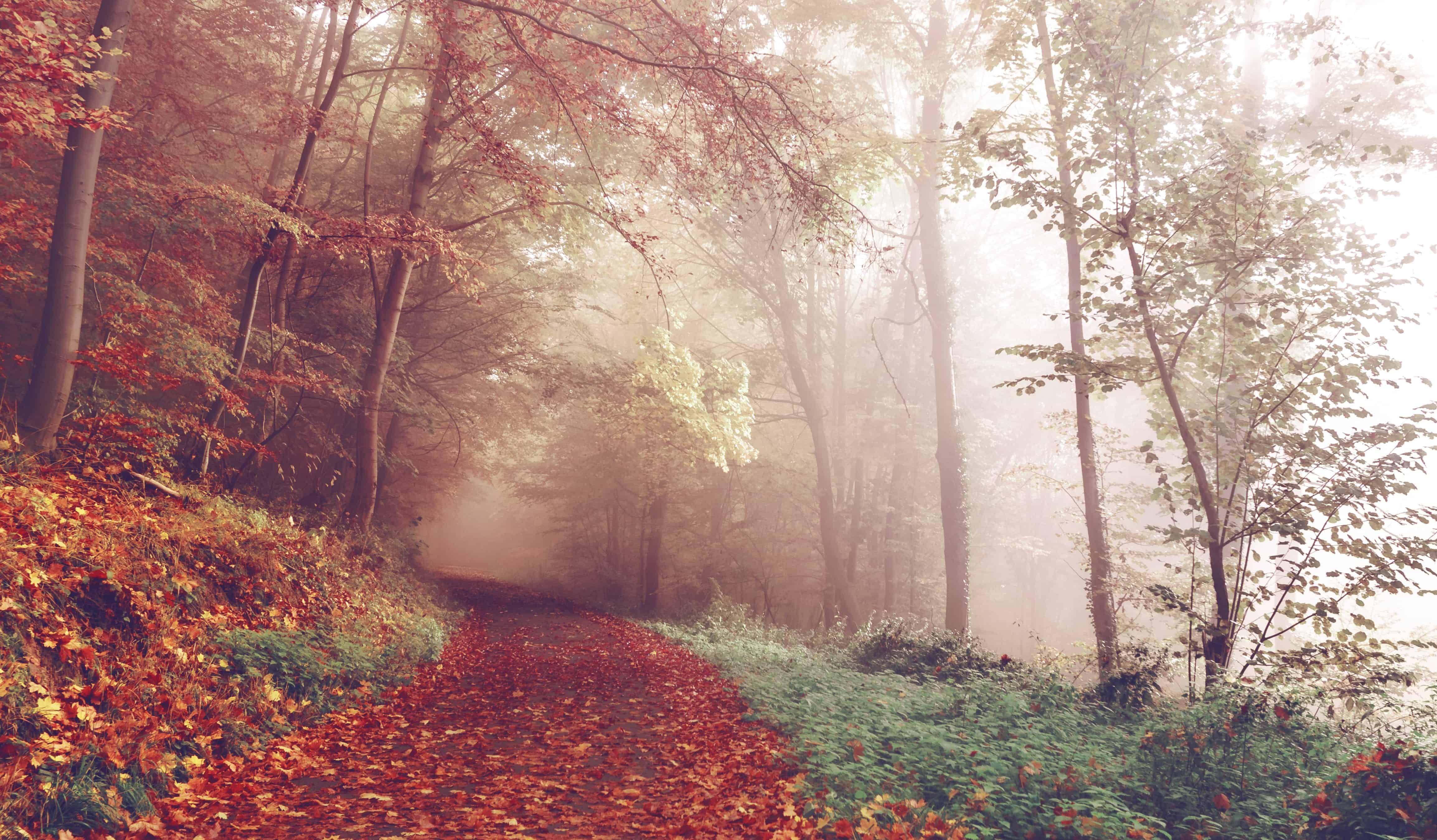 Fantasiereisen Texte kostenlos: Verzauberter Herbstwald