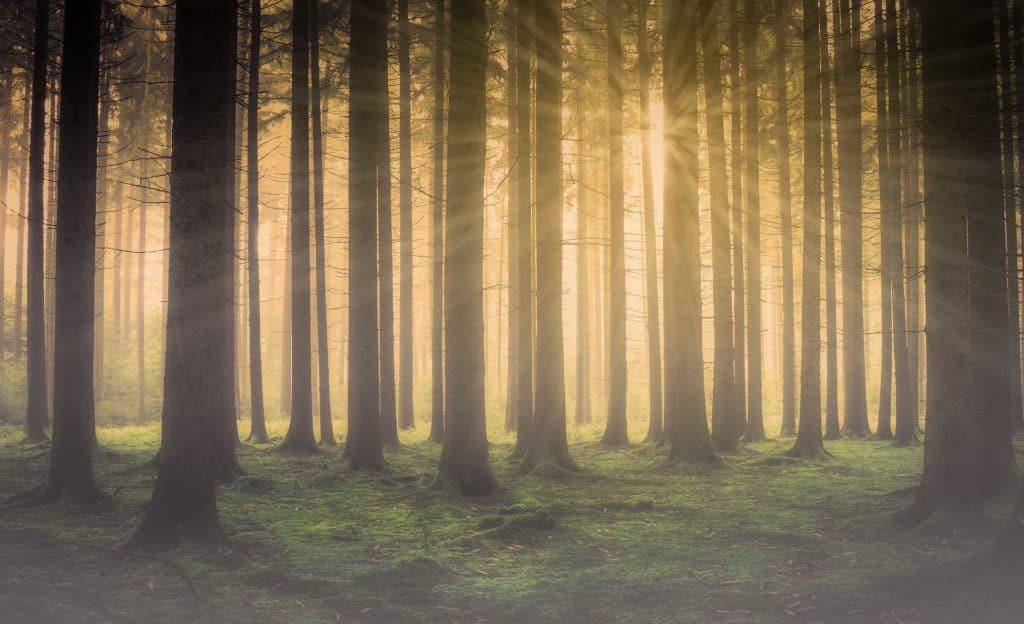 ein Spaziergang durch den Wald vermindert Ängste und Stress