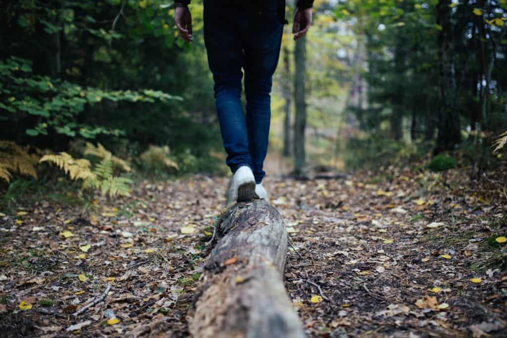 Geh- Meditation im Wald