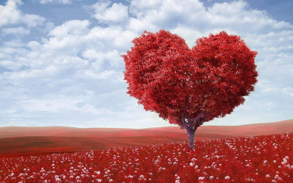 roter Herzbaum
